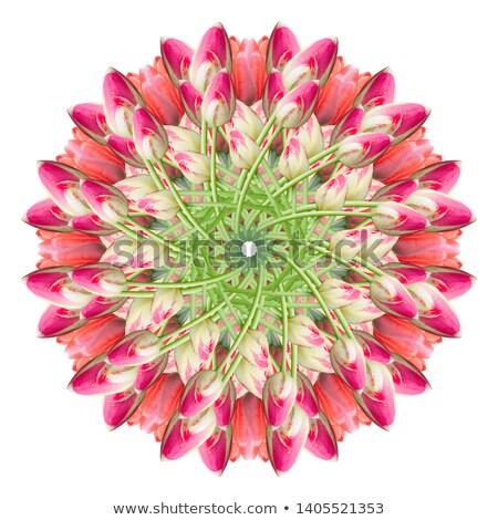 tulipany · kolaż · wiosennych · kwiatów · charakter · lata · zielone - zdjęcia stock © sognolucido