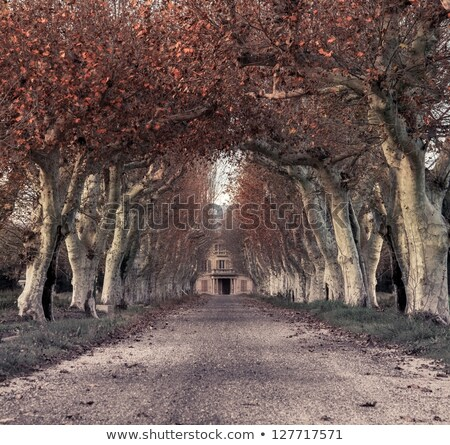 Beautiful alley with mansion in the end Stock photo © Nejron