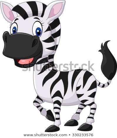 zebra posing in nature stock photo © oleksandro