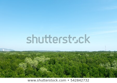 clear sky at swamp in Thailand,Background Stock photo © yanukit