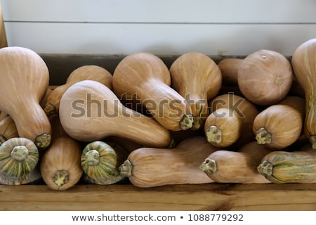 Butternut Butternuss cucurbita pumpkin pumpkins from autumn harv Stock photo © juniart