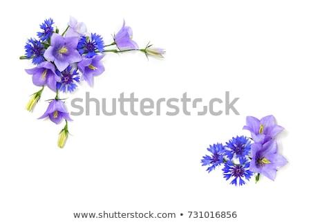バイオレット 花 緑 ストックフォト © lkpro