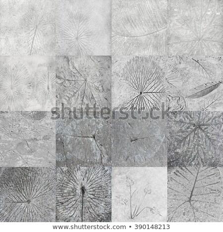fiori · intemperie · piastrelle · pattern · casa - foto d'archivio © scenery1