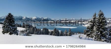 Kış manzara göl ağaç don ağaçlar Stok fotoğraf © AlisLuch