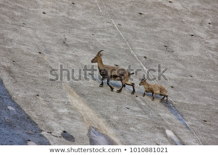 Homme sauvage alpine courir roches alpes Photo stock © Elenarts