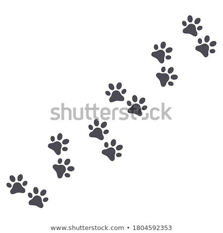 собака · следов · шаблон · ПЭТ · лапа · аннотация - Сток-фото © bluering