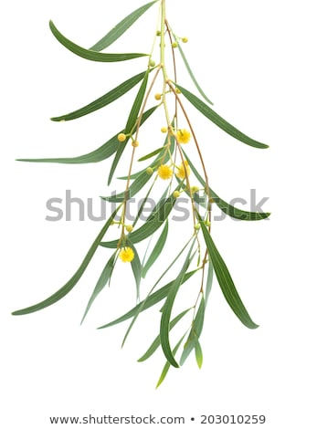 венок желтый цветы изолированный белый кадр Сток-фото © orensila