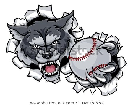 Lobo beisebol mascote zangado animal esportes Foto stock © Krisdog