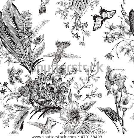 Senza soluzione di continuità vettore vintage pattern nero farfalle Foto d'archivio © mcherevan