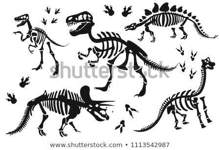 esqueleto · cinza · adulto · 3d · render · medicina · cor - foto stock © is2