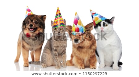 happy and adorable party pets with birthday hats stock photo © feedough