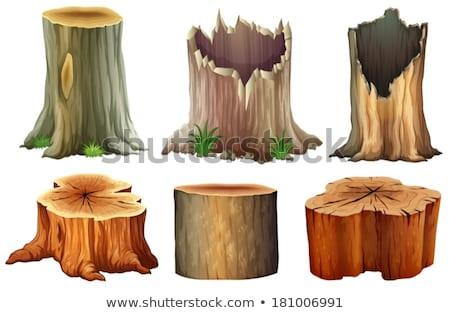 Boom houten ringen wortels gesneden bomen Stockfoto © MarySan