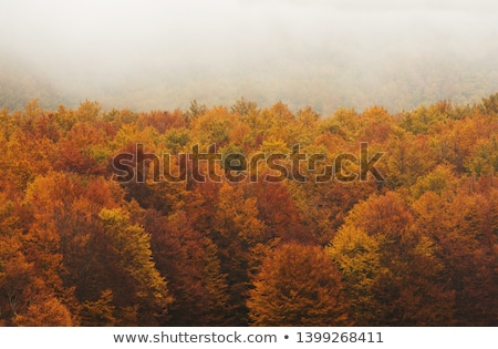 Autunno alberi nebbia mattina albero Foto d'archivio © ondrej83