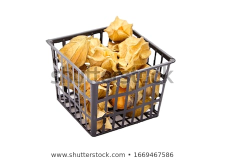 Ripe berries of physalis with dry leaves in a plastic basket on a blue background with space for tex Stock photo © artjazz