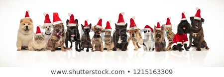 Stock photo: happy santa cats and dogs panting while sitting and standing