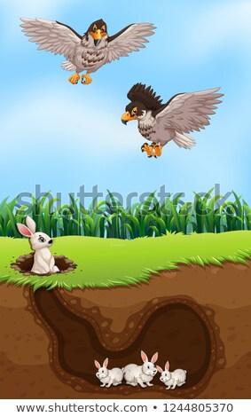 Orzeł polowanie królik ilustracja domu charakter Zdjęcia stock © colematt