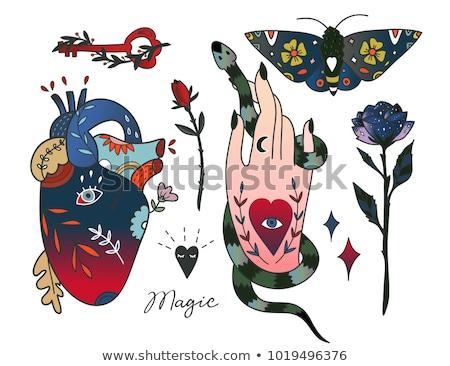 Anatomical heart with roses  Stock photo © kariiika