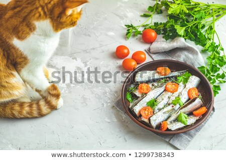 Stock photo:  Raw uncooked sea fish and red cat on gray concrete table