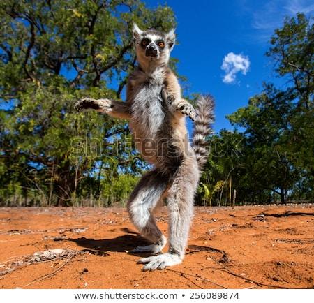 Vahşi hayvanlar ada örnek manzara dizayn arka plan Stok fotoğraf © colematt