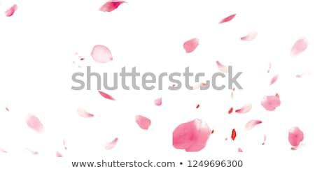 çiçek dekorasyon sakura kalp düğün Stok fotoğraf © odina222