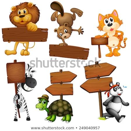 állat oroszlán fa deszka illusztráció éles fogak Stock fotó © lenm