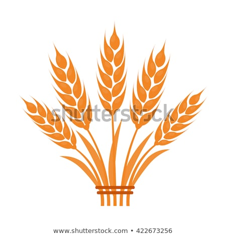Wheat flat cartoon icons Stock photo © netkov1