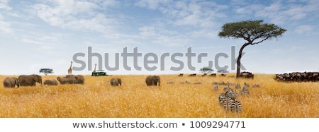 Safari wildlife Africa oameni Imagine de stoc © robuart