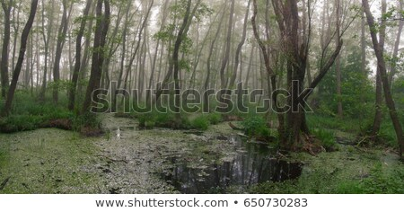 Goblin in the dark forest Stock photo © colematt