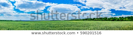 Lush Green Farmland Landscape with Blue Sky Stock photo © feverpitch
