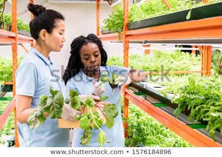 Kettő fiatal multikulturális női munkaruha kiválaszt Stock fotó © pressmaster