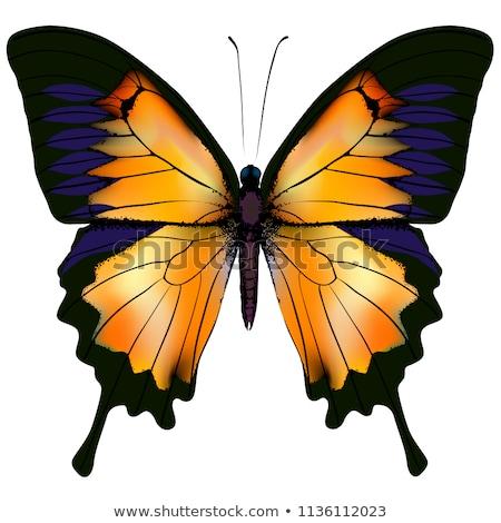 Luminous Butterfly Stock photo © blackmoon979
