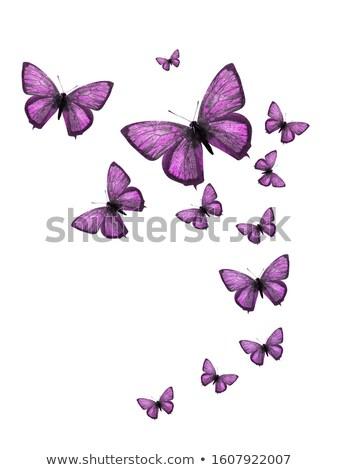dizayn · ayarlamak · çiçek · vektör · çiçek · sanat - stok fotoğraf © hermione