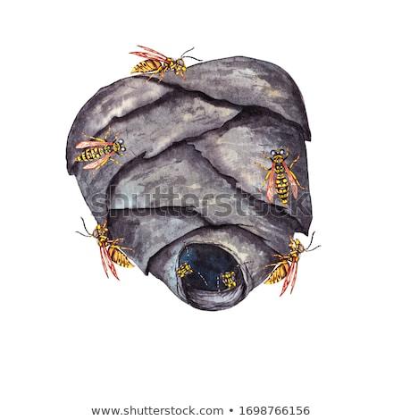 head of wasp in grey background Stock photo © gewoldi
