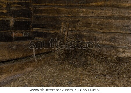 tehenek · istálló · feketefehér · eszik · széna · fekete - stock fotó © 5xinc