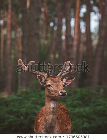 Trees of a forest during a daytime Stock photo © 3523studio