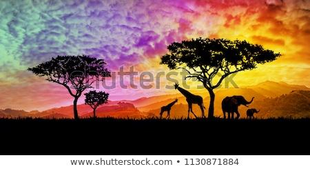Stockfoto: Illustraion Of Giraffes In Sunset In Africa