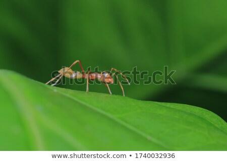 Formiga aranha natureza jardim floresta Foto stock © sweetcrisis
