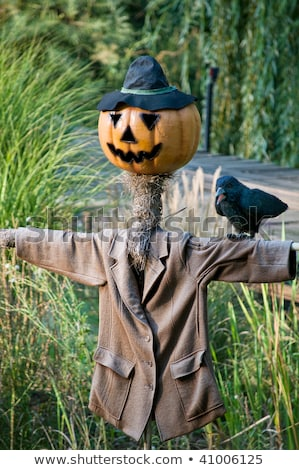 Scarecrow with Pumpkinface Stock photo © tepic