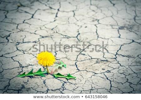 Tree sprout through the dry grass Stock photo © boroda