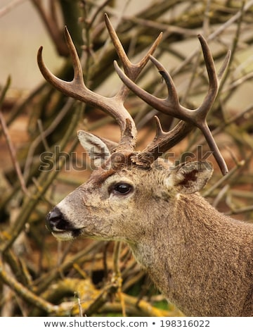mule deer droppings Stock photo © PixelsAway