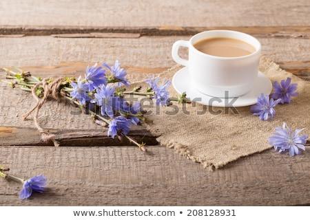 chicory hot drink stock photo © mady70