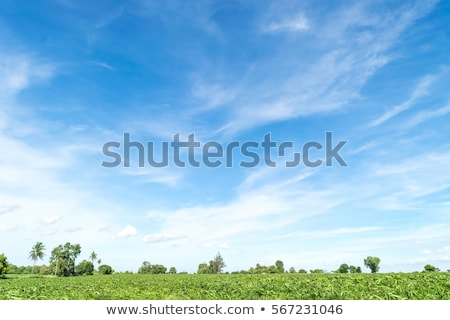 Сток-фото: Field With Clouded Sky