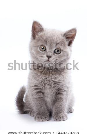 Сток-фото: сидят · котенка · Cartoon · иллюстрация · вектора