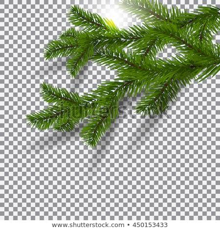 Karácsony zöld váz fa levél űr Stock fotó © barbaliss