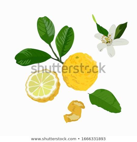 Laranja de folha isolado branco fruto Foto stock © natika