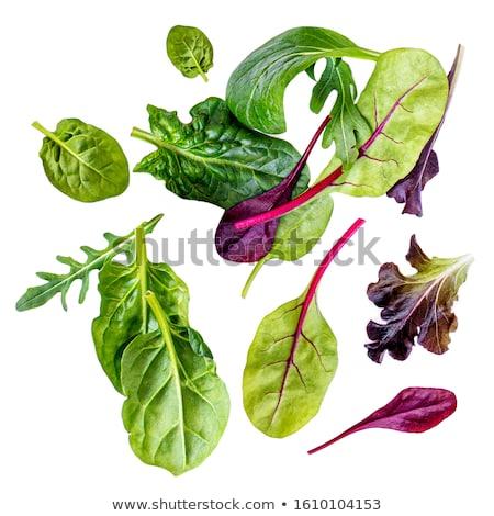 Kırmızı salata yaprakları yaprak yeşil Stok fotoğraf © xura