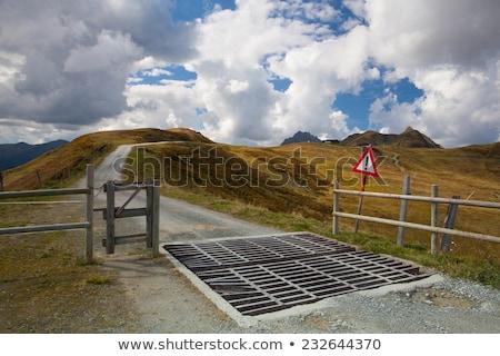Vee bewaker weg bergen Europa skiën Stockfoto © CaptureLight