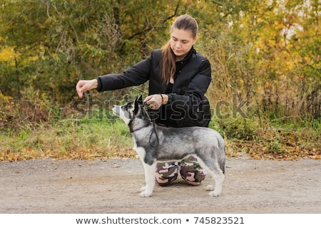 Canine education Stock photo © tilo
