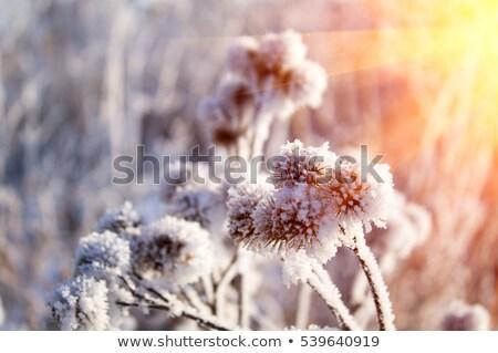 зима · закат · город · дома · здании · солнце - Сток-фото © inoj