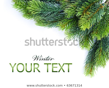 christmas tree branches isolated over white stock photo © valeriy